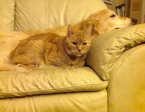 Hund und Katze haben einen neuen Freund