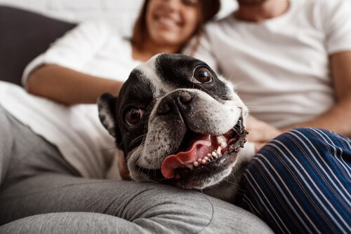 Wenn Hunde wie Menschen behandelt werden
