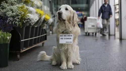Ney, ein Hund, an den wir uns immer erinnern werden