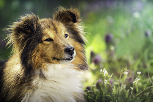 Olivenöl für entspannte Hunde