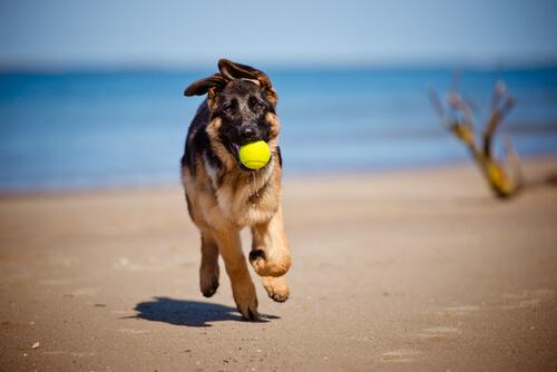 Olivenöl für Hunde