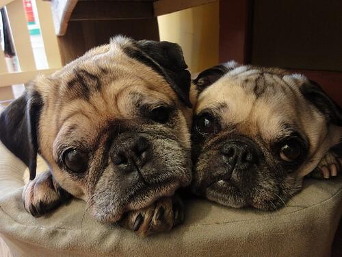 Hund schnarcht neben seinem vierbeinigen Freund