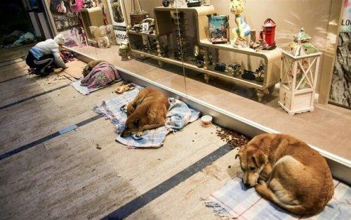 Schlafende Straßenhunde in einem Einkaufszentrum