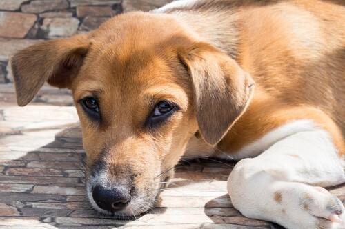 Die Weisheit eines Straßenhundes