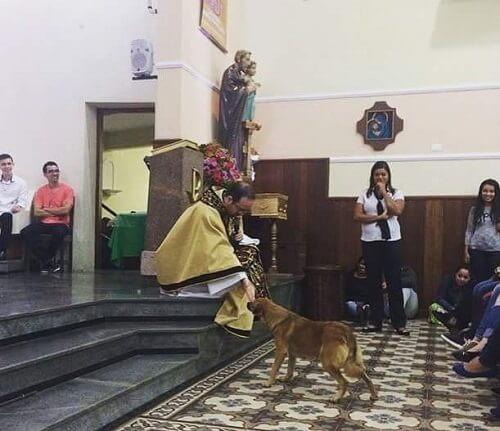Streunender Hund betritt Kirche und erhält den Segen des Priesters
