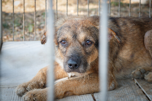 Ecuador: neue Gesetze gegen Tierquälerei