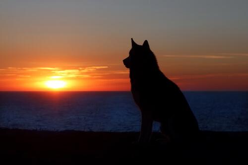 Kann die Trauer um ein Haustier mit der Trauer um einen Menschen verglichen werden?