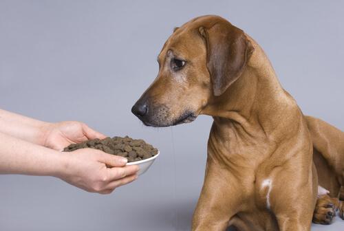 verschiedene Futterarten für Hunde nicht vermischen