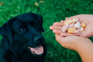 Apfelessig gut für Hund