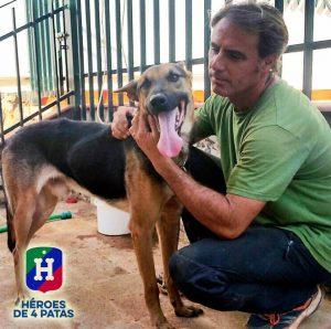pensionierte Polizeihunde adoptieren