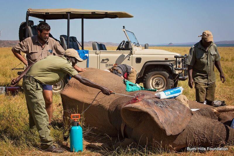 verletzter Elefant