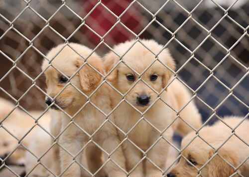 Haustier hinter Gitter
