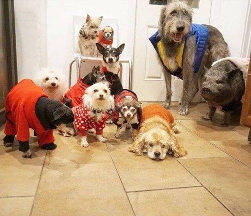 Adoption 10 alter Hunde und eines Schweins