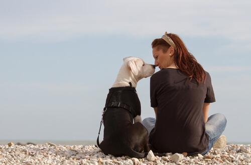 dein Hund zeigt dir, dass er dich liebt