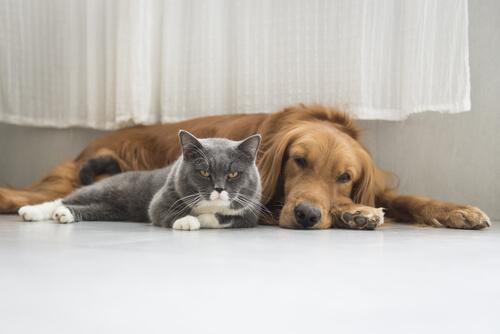Hund und Katze können dich jünger halten