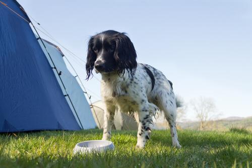 Nützliche Anwendungen mit Olivenölfür Hunde