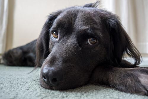 6 Dinge, die dein Hund nicht mag