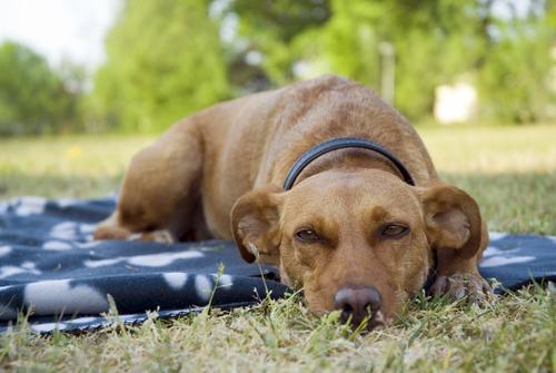 Hund auf der Wiese vor Kälte schützen