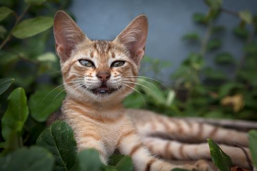 Katze auf der Katzeninsel