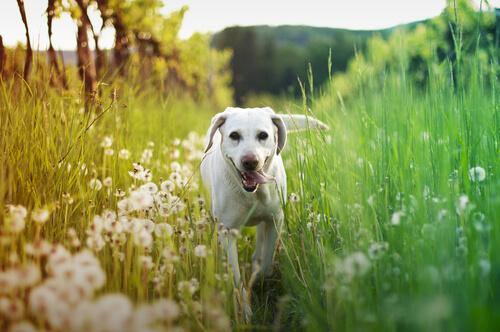 bestimmte Pflanzen sind Gift für Hunde