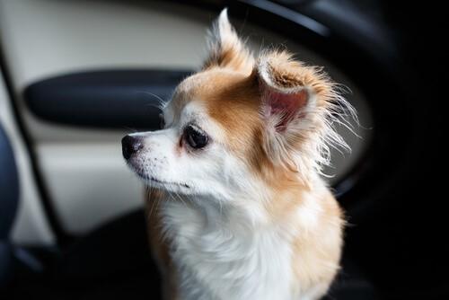 Mann schlägt Autoscheibe ein, um Hundeleben zu retten