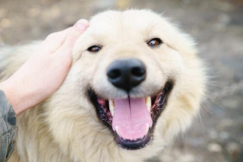 10 Gründe, warum ich verrückt nach meinem Hund bin