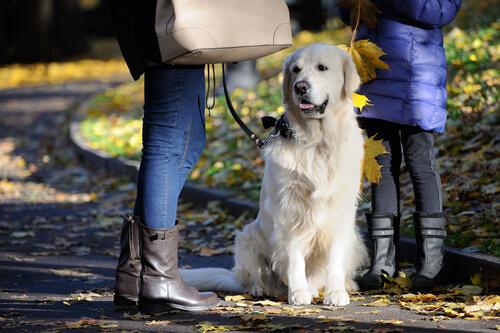 Hund mit Frauchen und Herrchen
