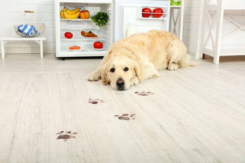 Hund will Karotten