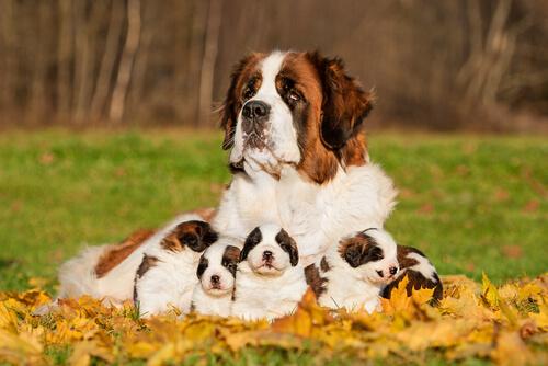 die teuersten Hunde der Welt, hier mit Familie