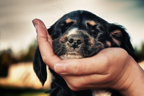 Hund zeigt, dass er dich liebt