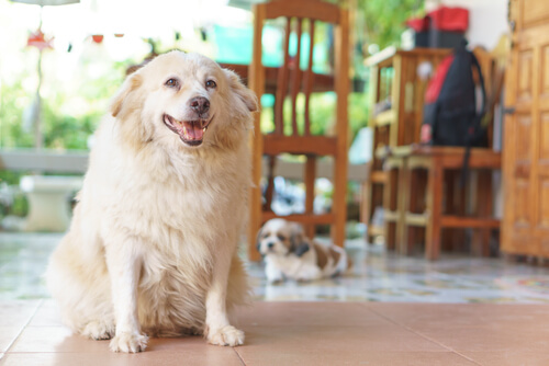 Hund älter