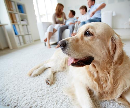 Herrchen mit Familie und Hund