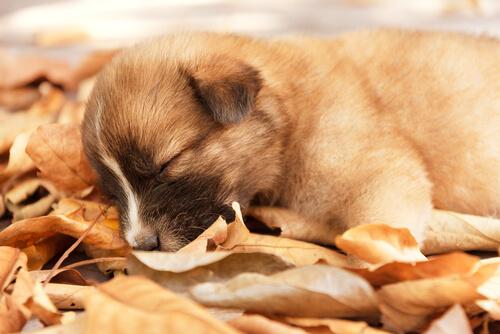 Was Die Schlafposition Deines Hundes über Seinen Charakter Verrät