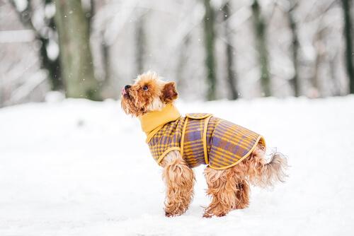 Hund vor Kälte schützen: 5 Tipps