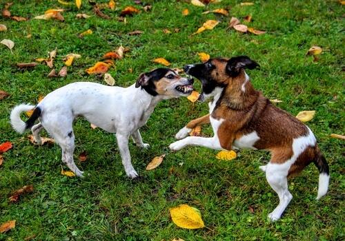 Was tun bei einer Rauferei zwischen Hunden?