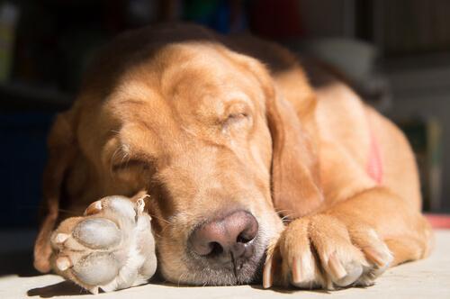 Unterschiedliche Schlafpositionen deines Hundes