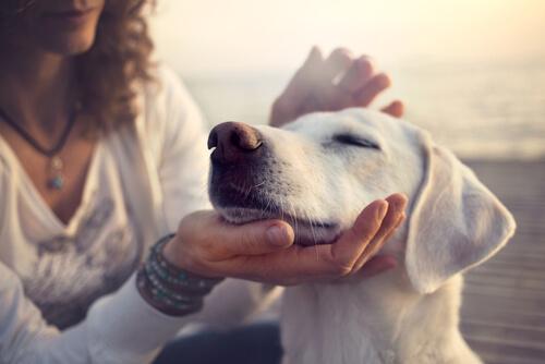 Zu verwöhnte Hunde können aggressiv werden