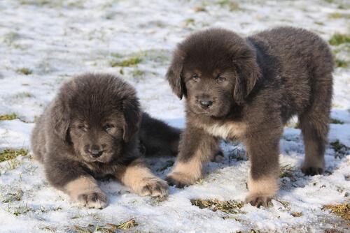 Die teuersten Hunde der Welt