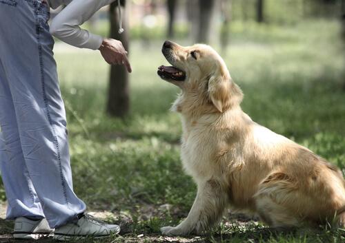 Mann erzieht Hund ohne Gewalt