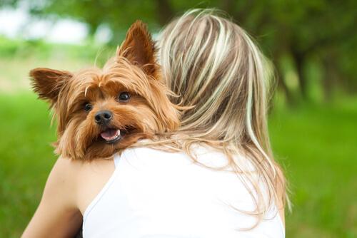 Woran erkennst du, dass dein Hund dich liebt?