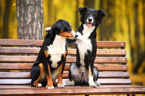 zwei Hunde im Park