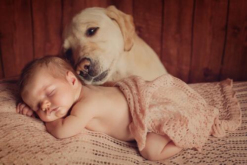 Wie du deinen Hund auf ein Baby vorbereitest – 6 Tipps