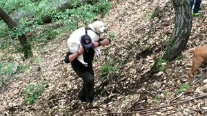 Labrador allein im Wald