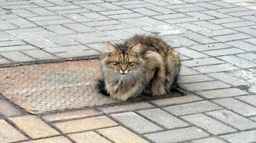 Ein verlassenes Kätzchen wartet seit einem Jahr auf seine Besitzer