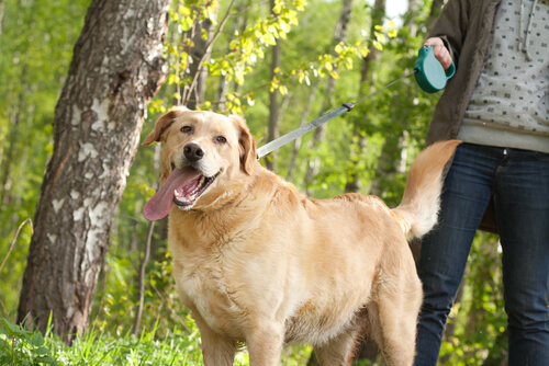 Hausmittel gegen Flohbisse um Hund im Park zu schützen