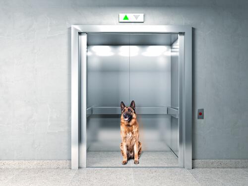 Intelligent: Hund bleibt im Fahrstuhl stecken und...