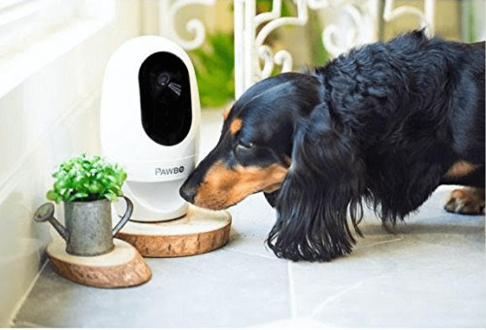 Hund zuhause