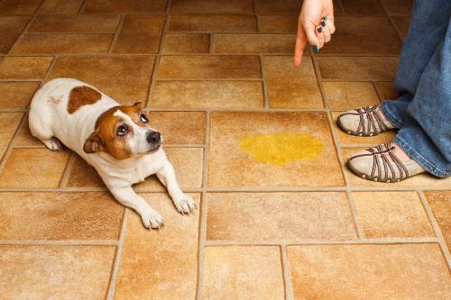 Hunde für pinkeln bestrafen