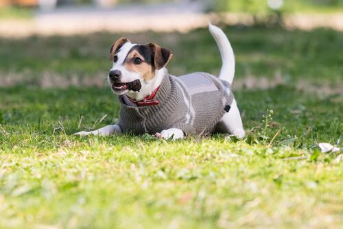 Tipps, um Hunde vor Kälte zu schützen