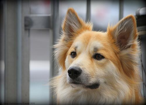 Wie reinigt man Hundeohren?